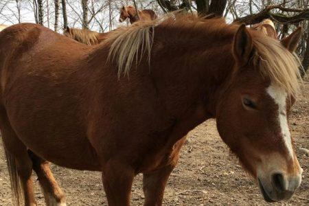 Cavalli e preistorici a LANZO D'INTELVI